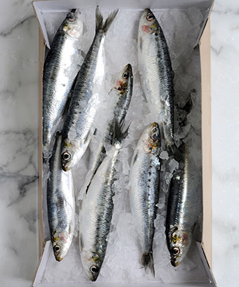 Brasserie-Blanc-grilled-atlantic-sardines-with-tomato-sauce-recipes-tips-and-videos