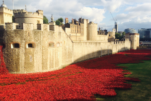 Bristol Poppy Day offer